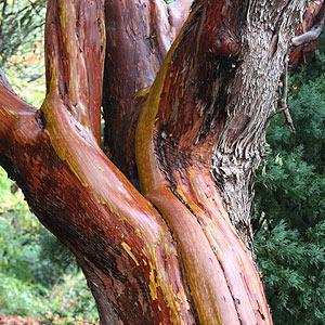Ing Trees Online