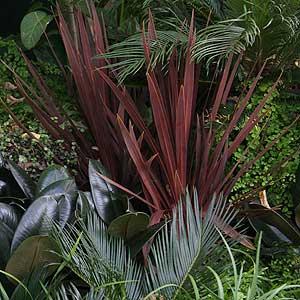 Plants To Create A Tropical Garden